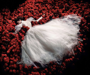 rose, red, and dress image
