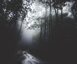 dark, tree, and forest image