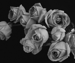 black and white, pretty, and roses image