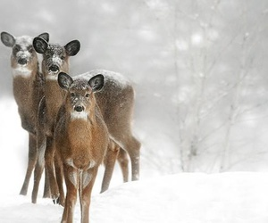 white, deer, and snow image