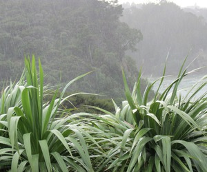 green, plants, and pale image