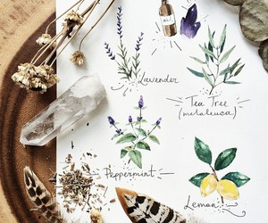 feather, flower, and herb image