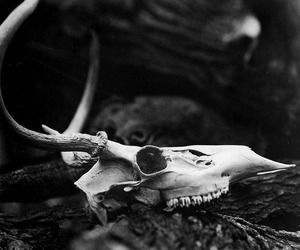 skull, nature, and antlers image