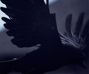 raven, black, and bird image
