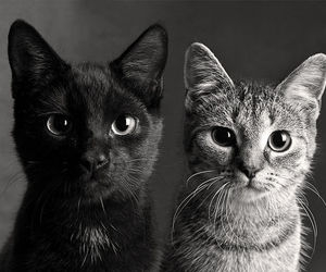 black and white, kitten, and cats image