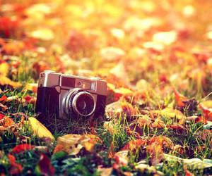camera, autumn, and fall image