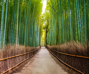 bamboo, forest, and japan image