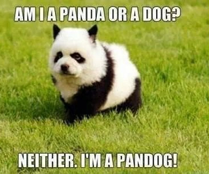 panda, dog, and cute image