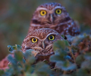 animal and owls image