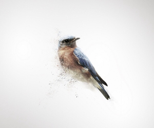 bird and falling to pieces image