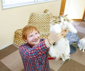 ed, ed sheeran, and cat image
