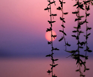 sunset, sun, and nature image