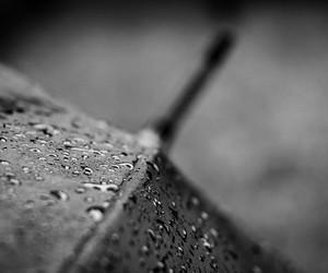 rain, rainy, and umbrella image