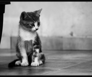 adorable, beautiful, and black and white image