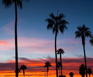 sunset, sky, and palms image
