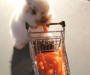 cute, carrot, and rabbit image