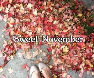 leaves and november image