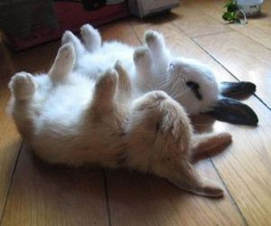bunnies, aww, and cute image