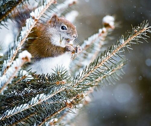 squirrel, winter, and snow image