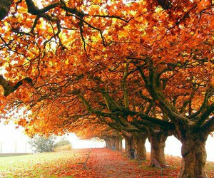 autumn, country, and fall image