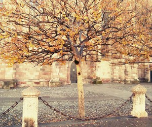 tree; and autumn; image