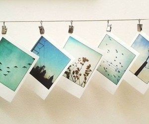 photo, photography, and polaroid image