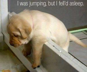 dog, fell asleep, and jumping image