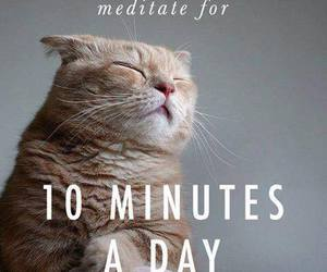 cat, meditate, and quote image