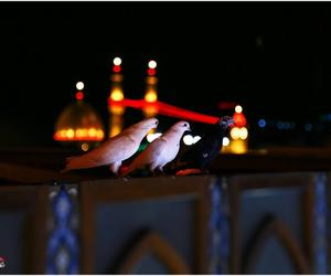 arab, tumblr, and imam image