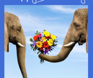 elephants, flowers, and funny image