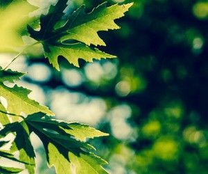 green, leafs, and nature image