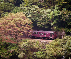 forest, holiday, and train image