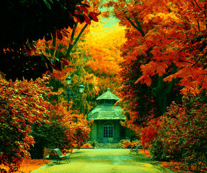autumn and orange image