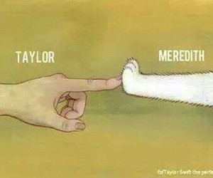 cats, hands, and meredith image