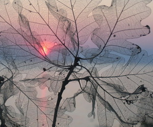 leaves, nature, and sunset image