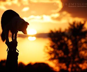 dog, summer, and sun image