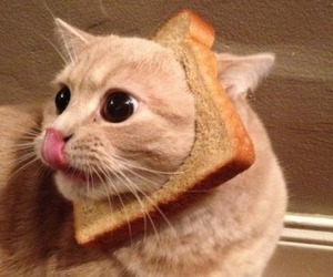 cat, cute, and bread image