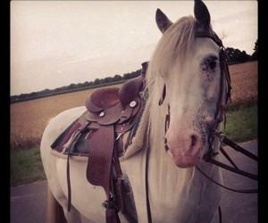 horse, Joey, and pferd image