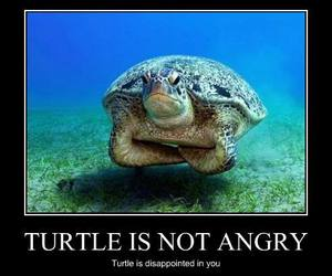 turtle, funny, and angry image