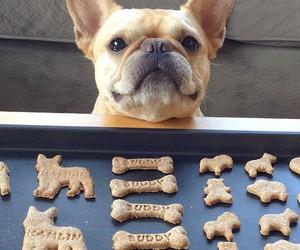 bulldog, Cookies, and french bulldog image
