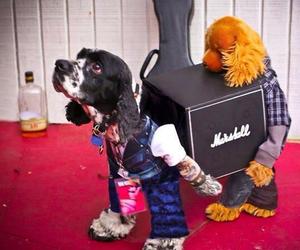 dog, Halloween, and costume image