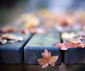 leaves and season image