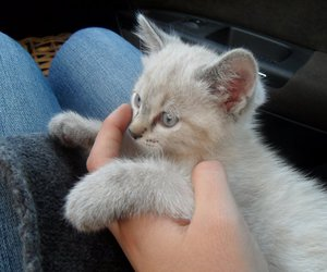 kitten, cute, and knut image