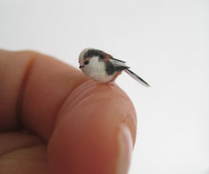 bird, cute, and finger image