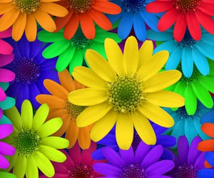 flowers, colors, and colorful image