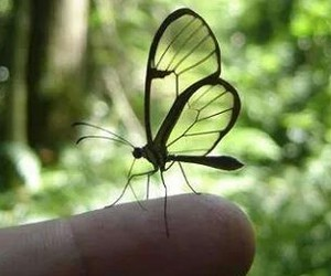 butterfly, green, and insect image
