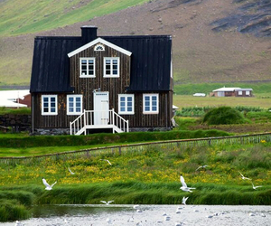 birds, house, and nature image