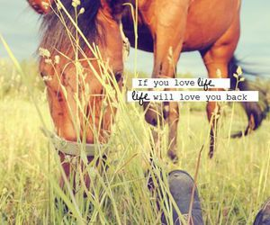 country, love, and horse image