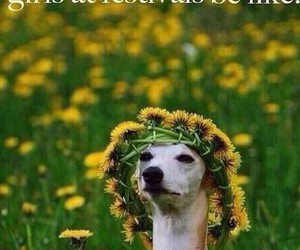 festival, funny, and dog image
