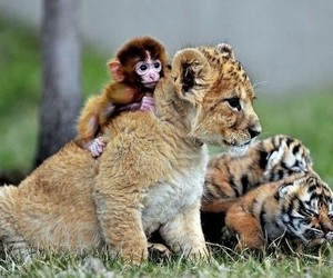 animals, friendship, and love image